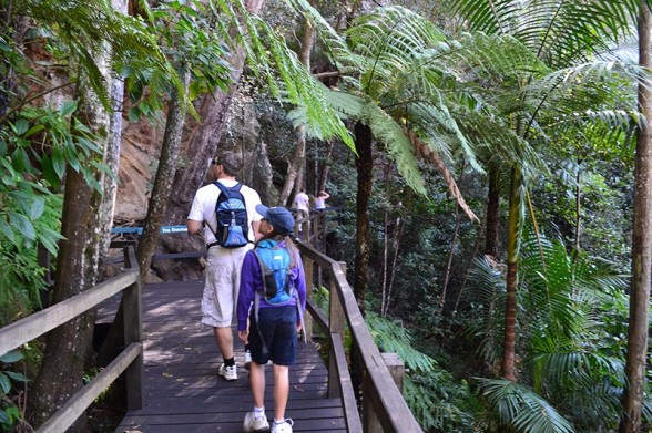 Cania Gorge - Large Tree Ferns
