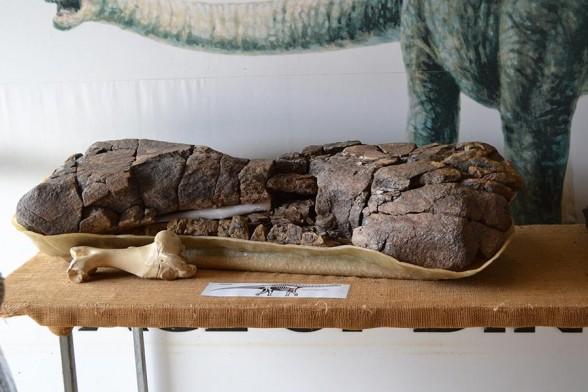 Winton, Age of Dinosaurs - Big bone