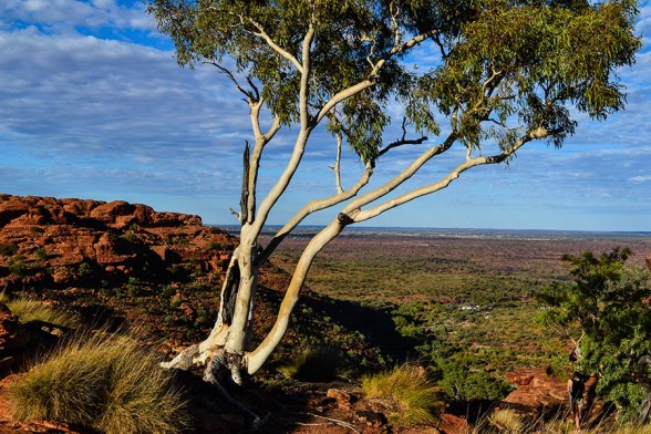Kings Canyon, Lookout
