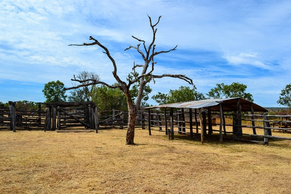 Timber-Creek, Bullita Homestead Stockyards
