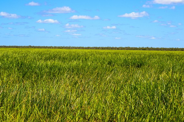 Mary-River-NP, Grass floodplain
