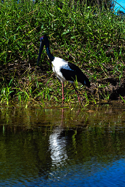 Mary-River-NP, Jabiru